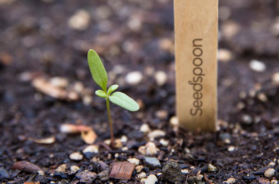 seedthumb.jpg