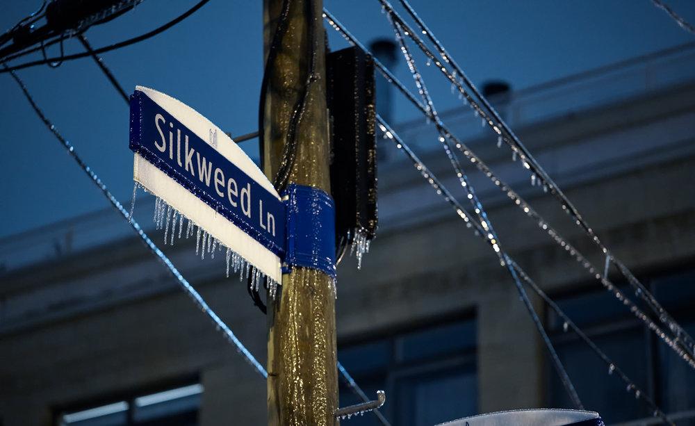 frozen_silkweed_ice-storm_01.jpg