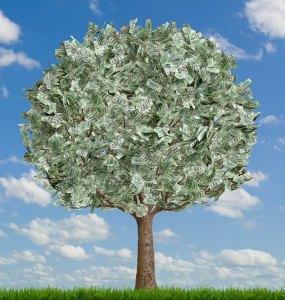 money_tree.jpg