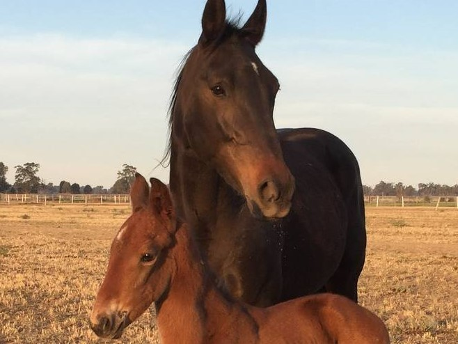 fOR dEAR LIFE WITH HER NEW ARRIVAL, A LIVELY ALWAYS B MIKI COLT