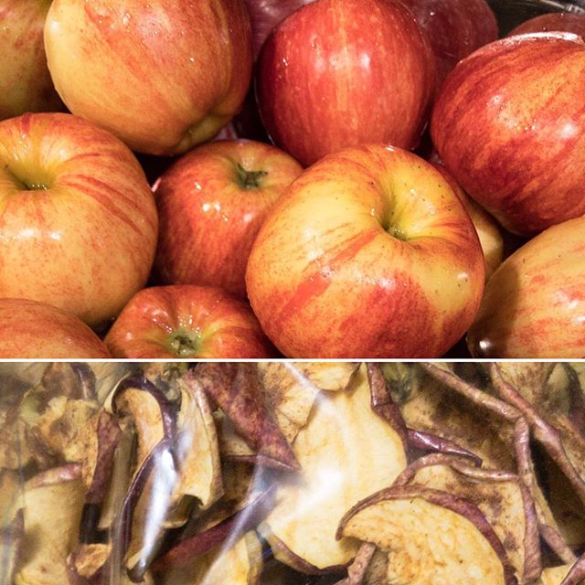 Turning apples to chips! Who knew snacking healthy would be so time consuming… or addictive, 56 apples in 4 batches this week!