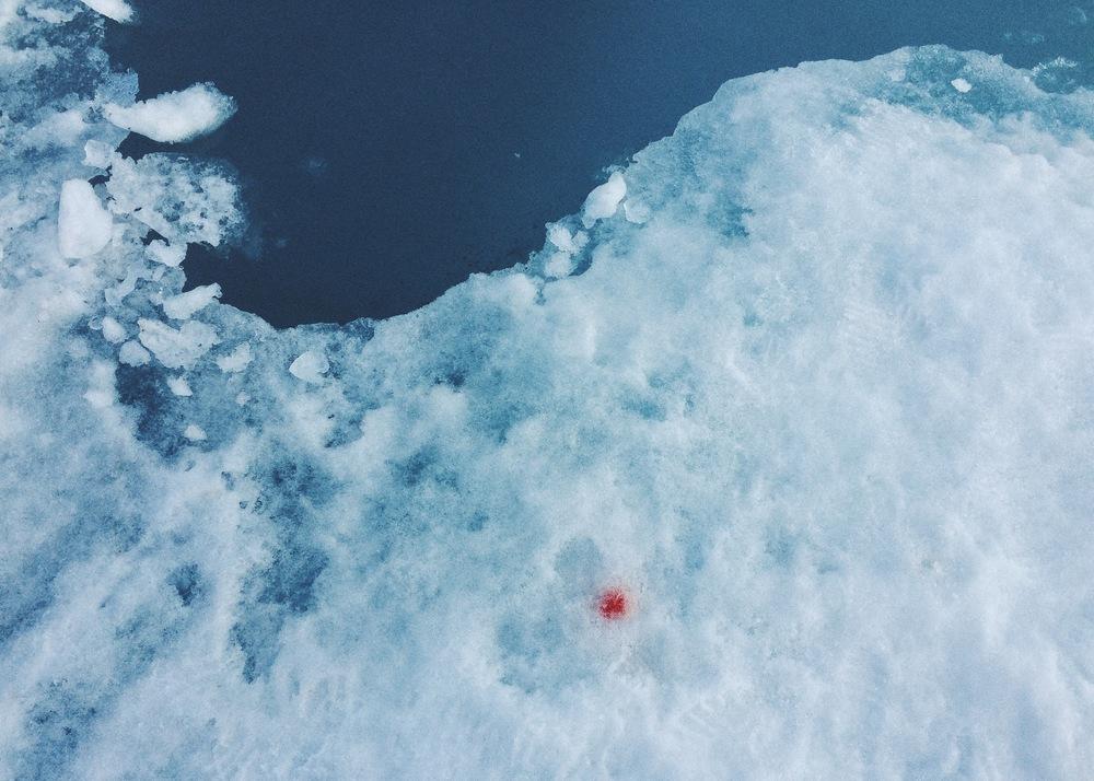 Ittoqqortoormiit, Greenland.  4 weeks, summer 2015.
