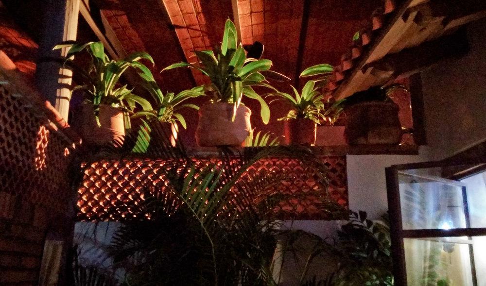 Casa-Joyero-Sayulita-potted-plants.jpg