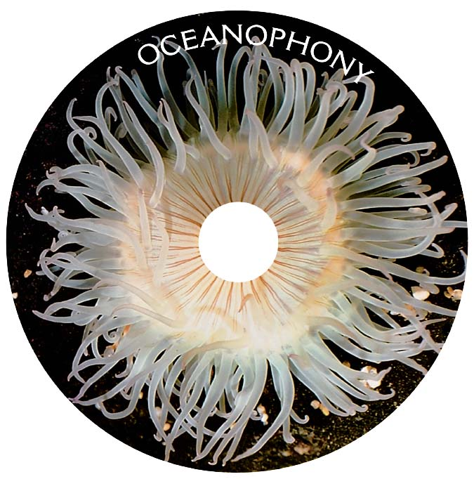 Oceanophony CD Disc.jpg