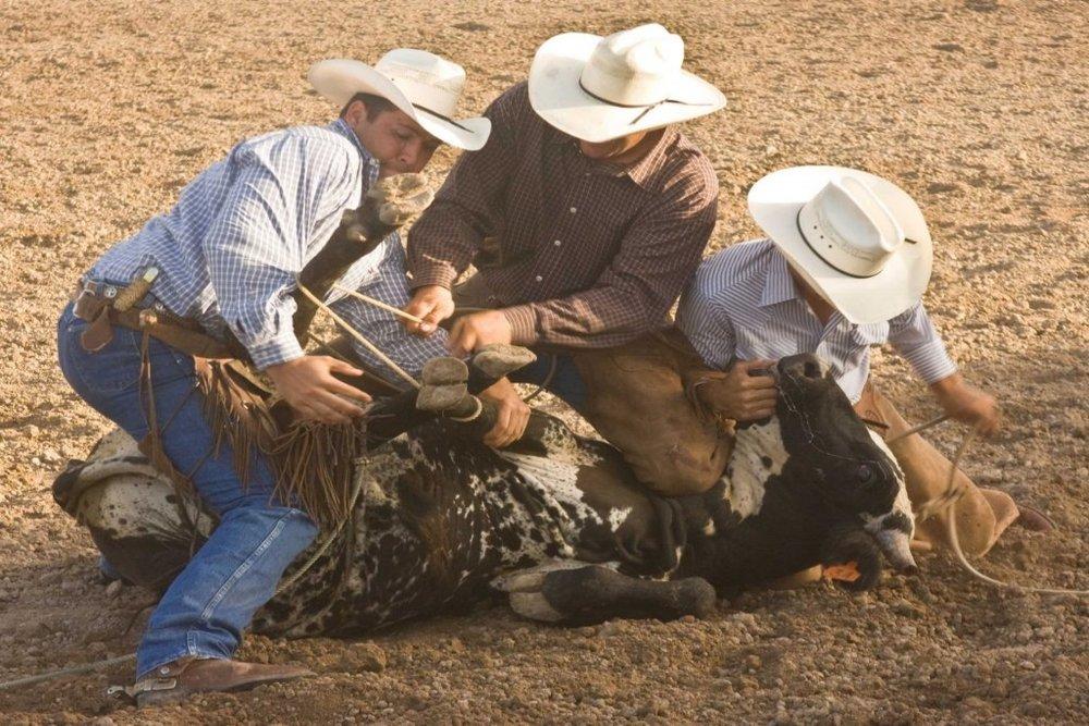 Boerne Rodeo