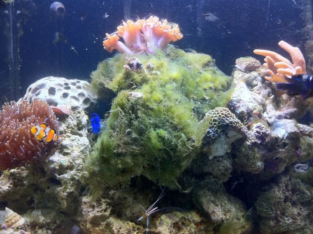 Courtesy of ReefSanctuary.com