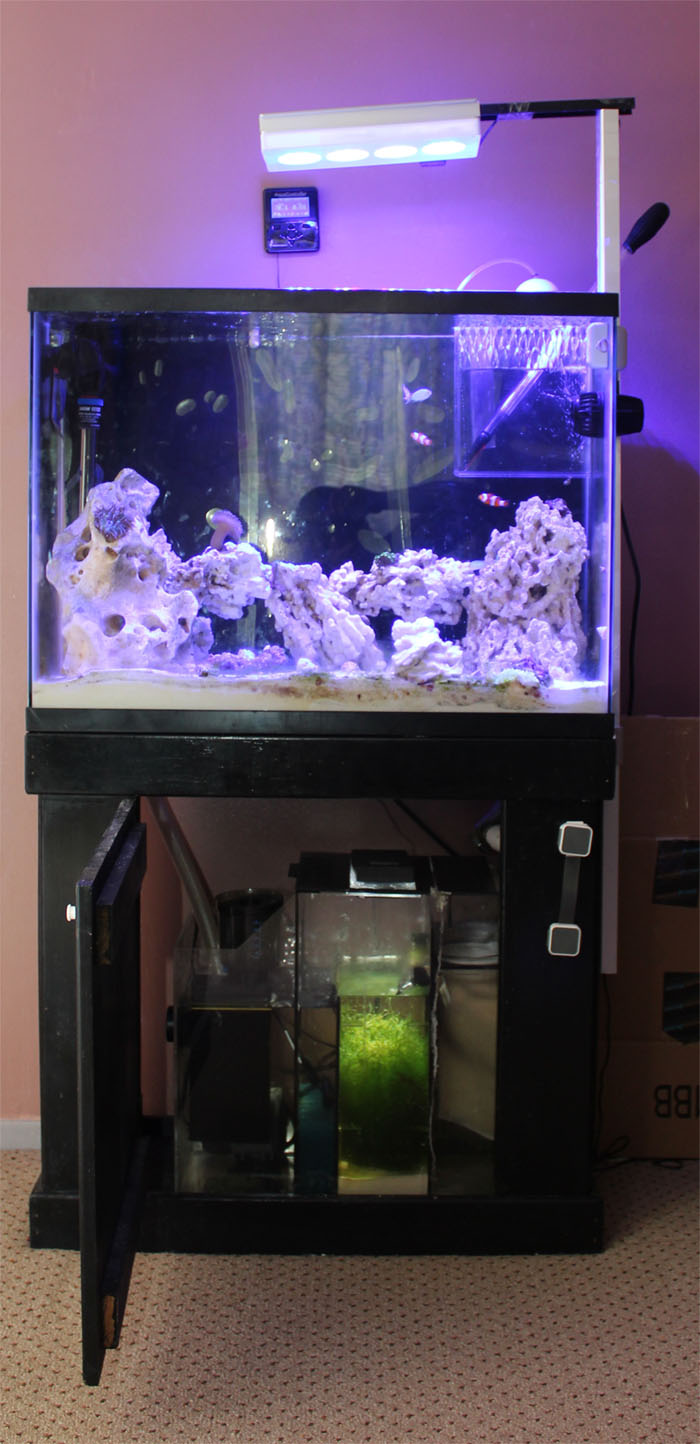 37 Gallon Nano Reef
