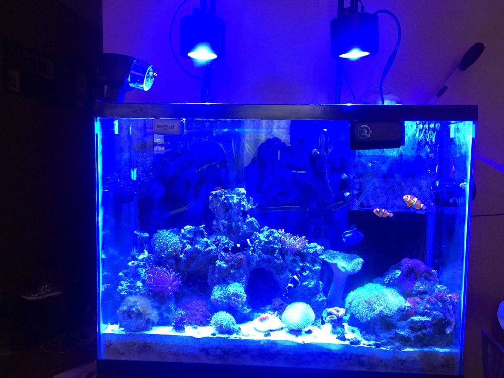 old_37_gallon_reef.jpg