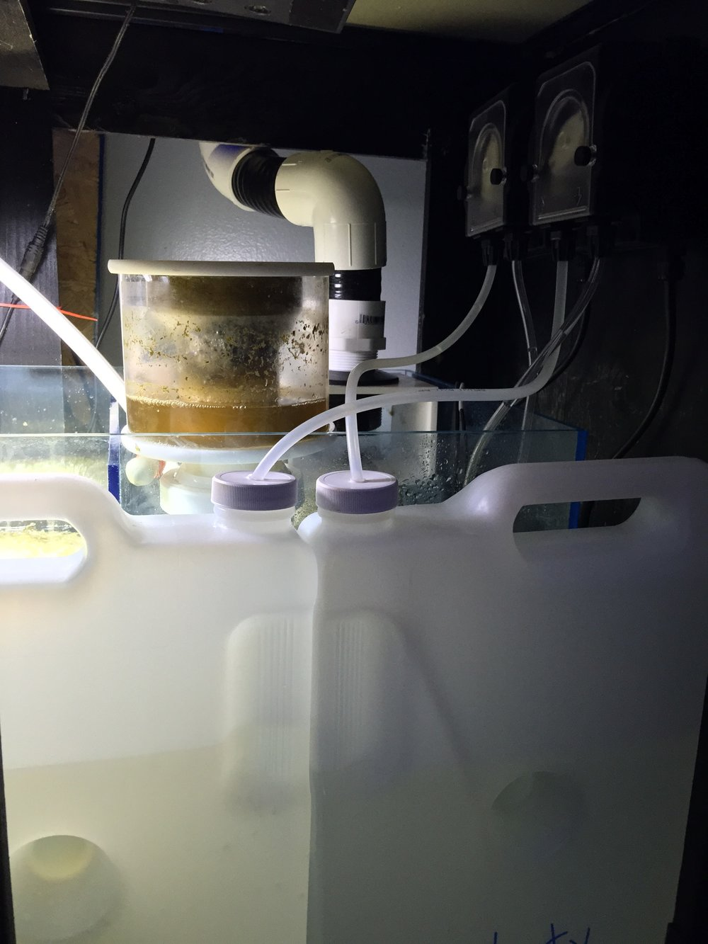 Vertex Omega 130 running on 50 gallon breeder