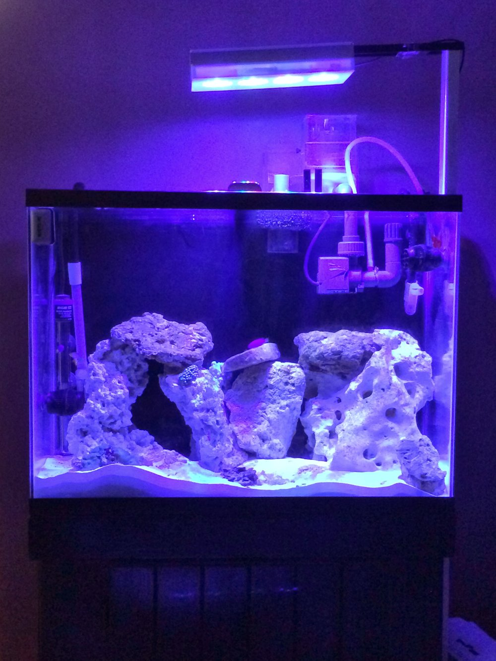 37 Gallon with AI Hydra Lights