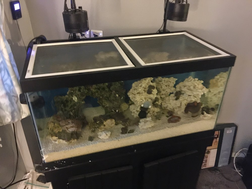 50 Gallon Breeder with Kessil A360