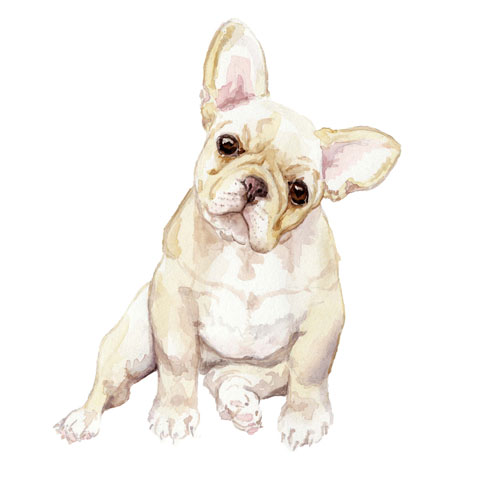 WANDERING LAUR FINE ART Wandering Laur offers greeting cards, art prints and custom pet portraits featuring whimsical watercolors of cats, dogs and various creatures.