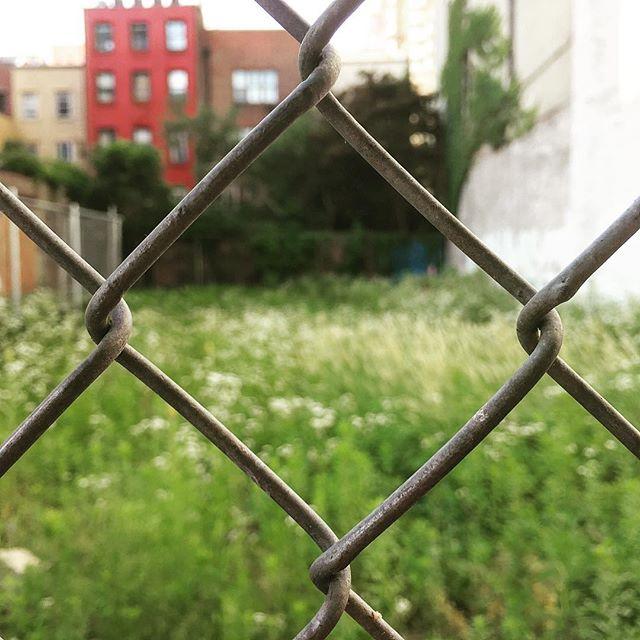 #urbanmeadow