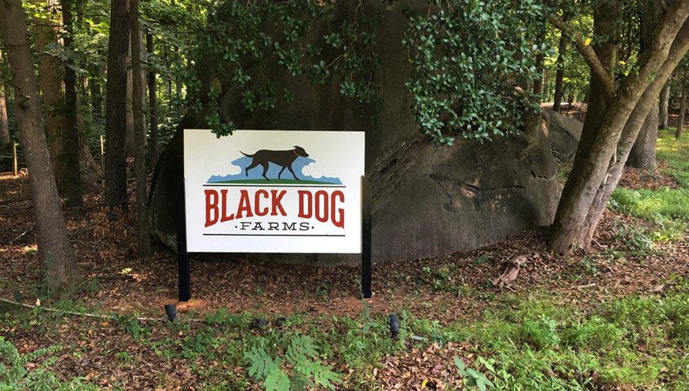 blackdogpic.jpg