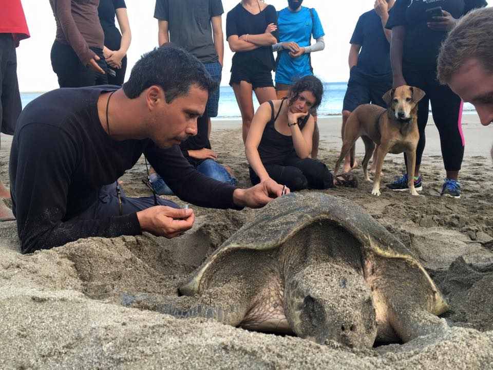 Sea Turtle Research, Costa Rica