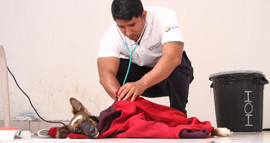 help-animals-galapagos.jpg