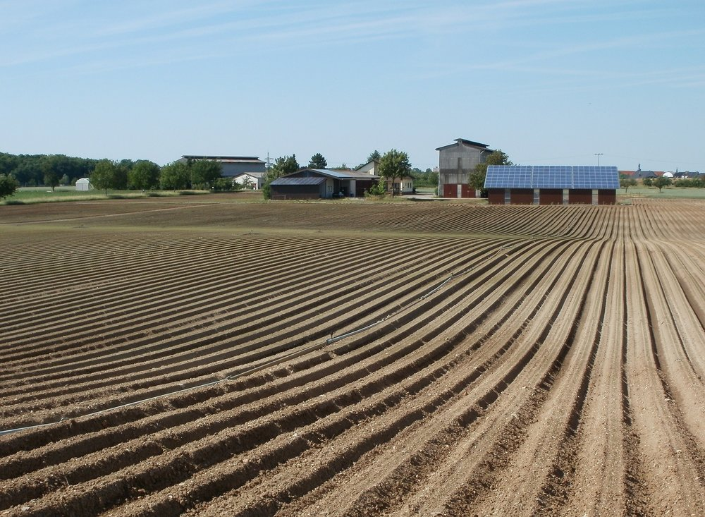 Vast acres of land are used to the growing of crops for animal feed