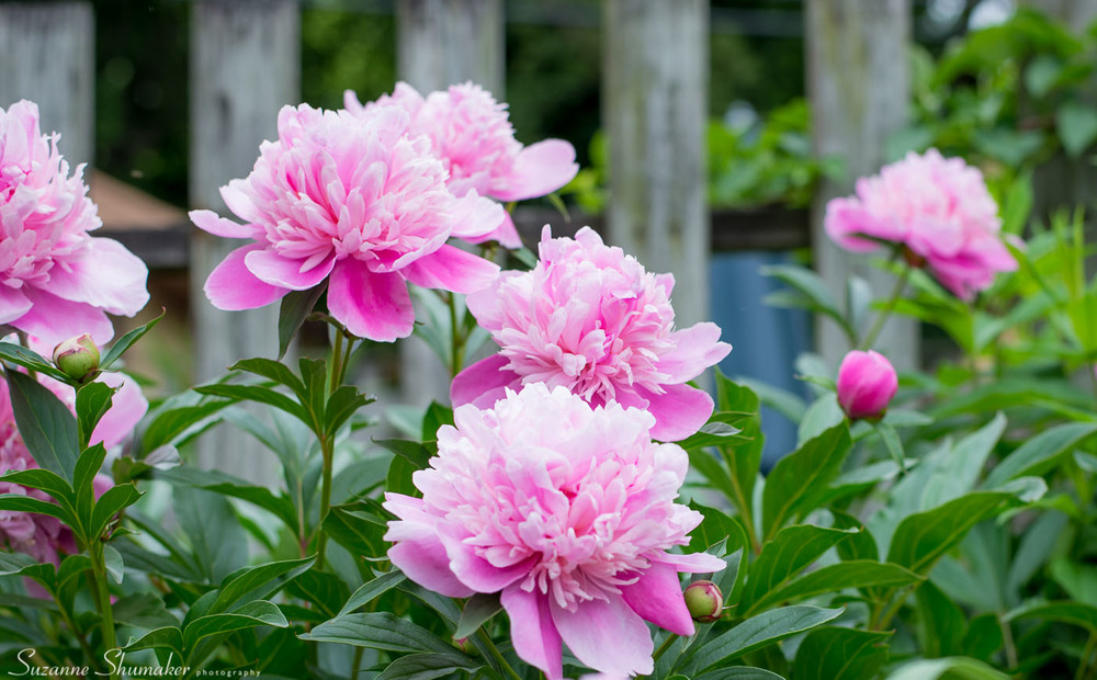 156 My Garden