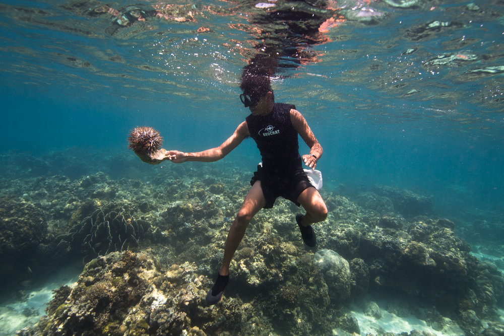 Jerome precariously removing a crown of thorns off the reef of Danjugan Island. (The over collection of the crown of thorns predators, the humphead wrasse and giant triton, makes many places in the Philippines vulnerable to crown of thorns outbreaks, which can decimate an entire reef.)