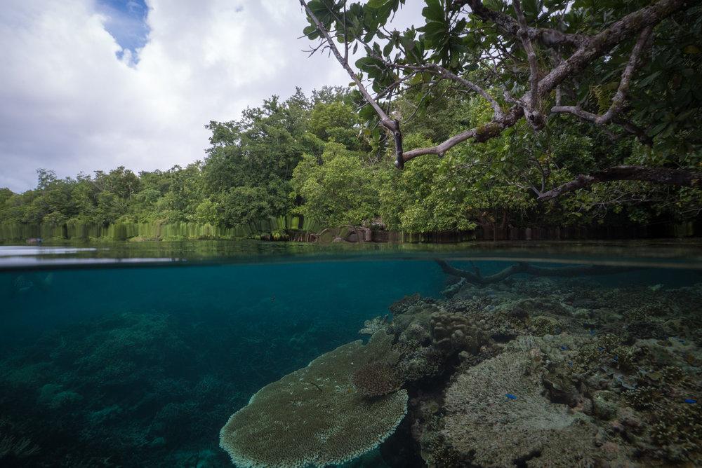 The lush seascape of the Solomon Islands.
