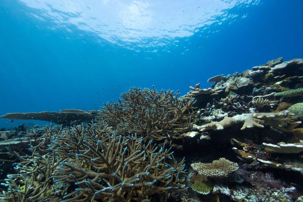 Healthy corals at Mbigo Mbigo Reef.