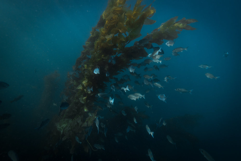 California's marine protected area is home to giant kelp forests - the underwater world is well worth exploring next time you visit.