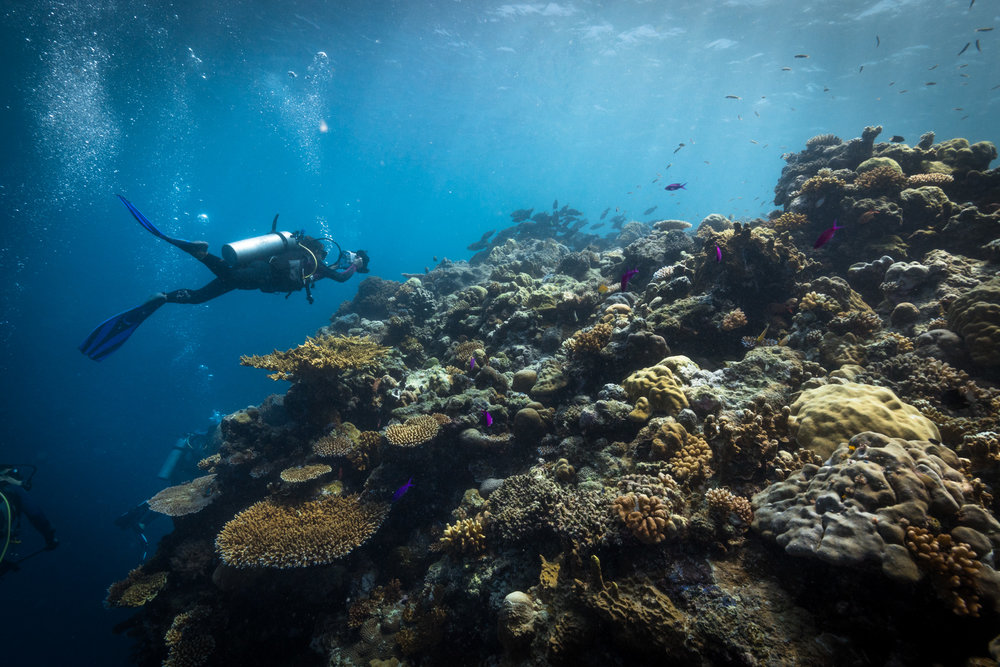 Co-Director Danielle Ryan filming a school of parrot fish in Palau.
