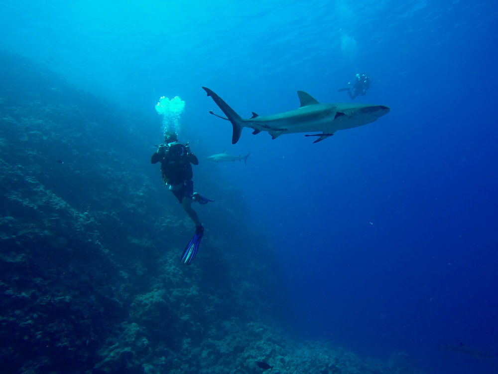 Co-Director James Sherwood filming a reef shark in the Coral Sea, 2015.