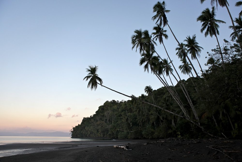 Corcovado National Park at dusk.