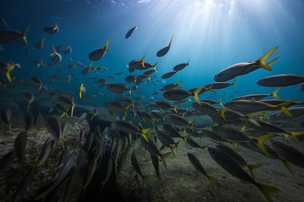 school of fish @ James Sherwood, Bluebottle Films.jpg