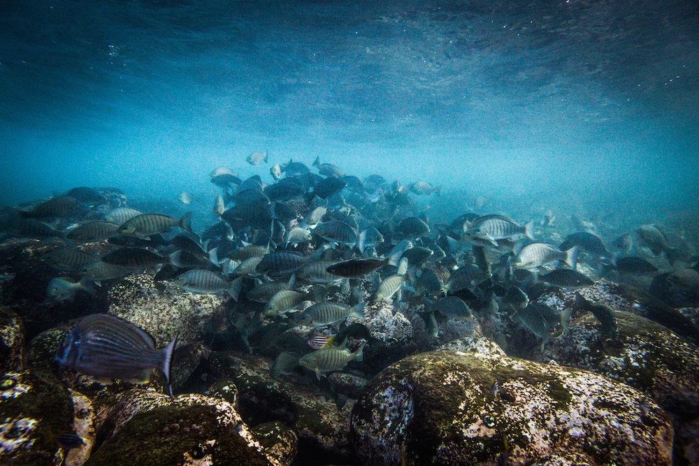 fish swimming together ©James Sherwood - Bluebottle Films copy 2.jpg