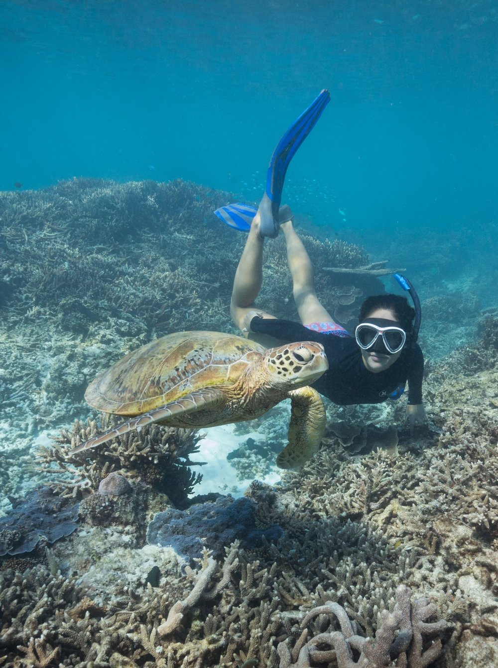 Co-Director+Danielle+Ryan+-+Turtle+on+Great+Barrier+Reef+%C2%A9%C2%A0James+Sherwood%2C+Bluebottle+Films%3AThe+Map+to+Paradise.jpg