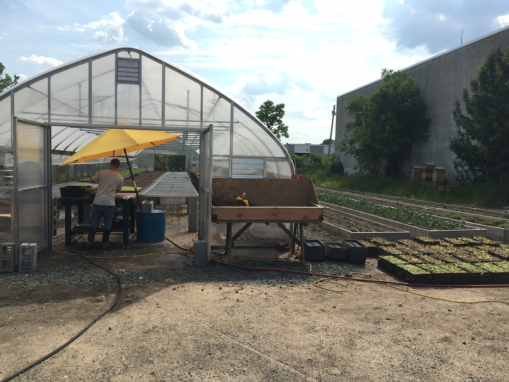 greenhouse and raised beds.jpg
