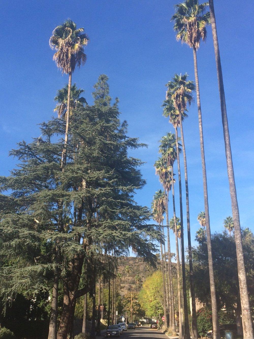 Palm Trees Street_2.JPG