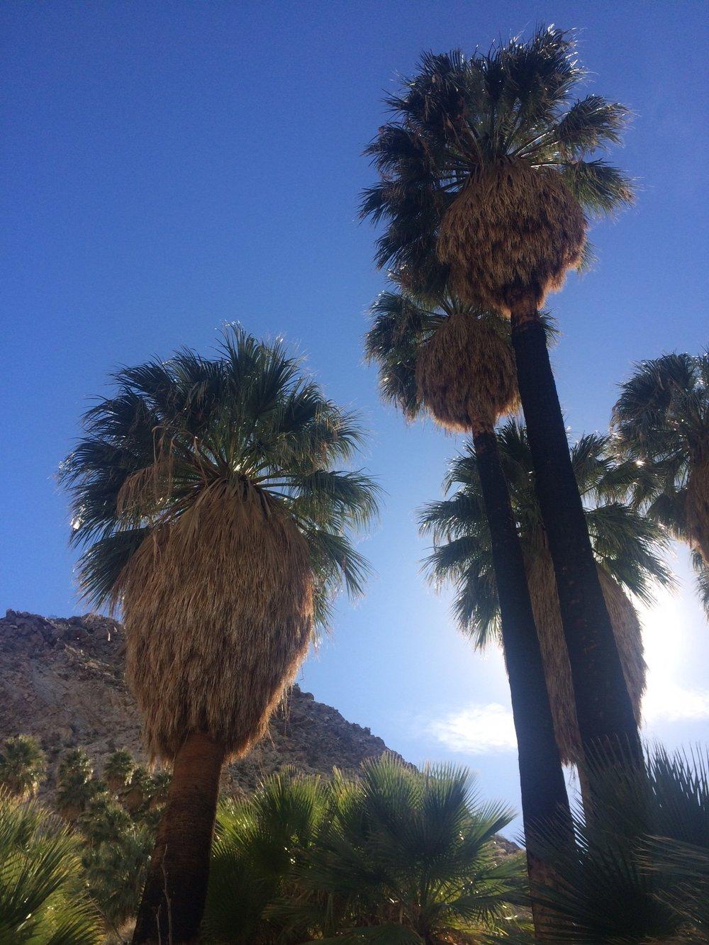 Palm Trees_2.JPG