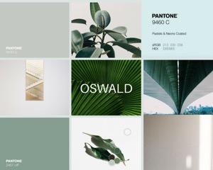 Transpondex - moodboard collage.jpeg
