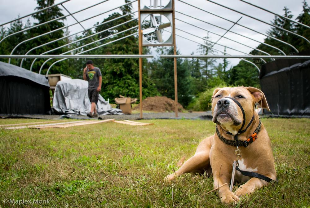 Angel Dog Loves Going to the Farm (near Eugene, Oregon)