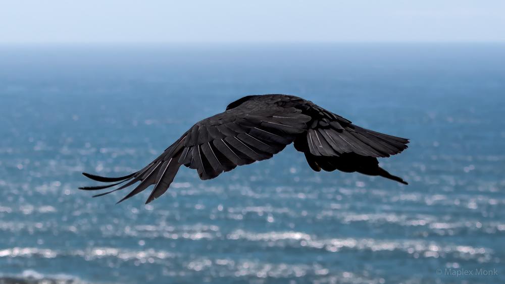 Black Bird Near A Lighthouse - Oregon Coast