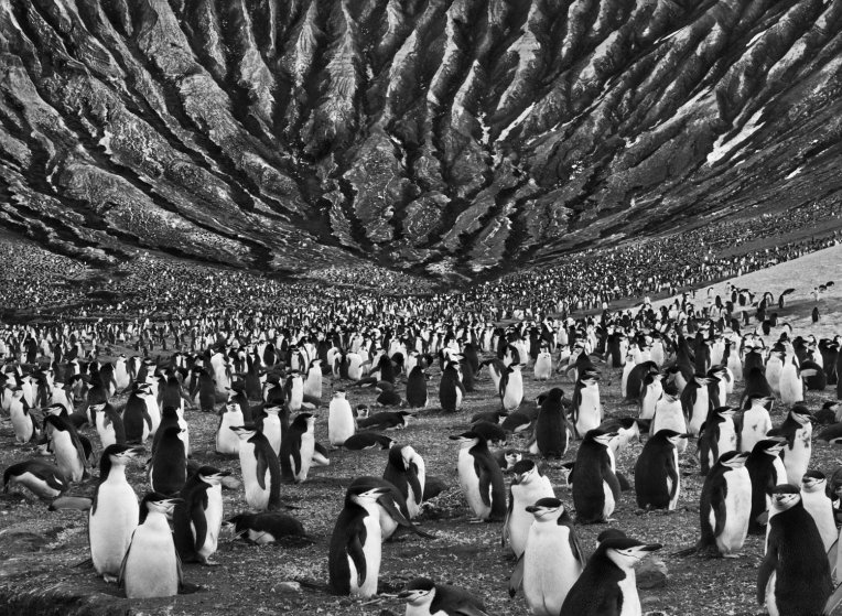 Penguis by Sebastiᾶo Salgado Description: This photo provokes an image in my mind of the passing of millenia and the relentlessness of the cycles of life.