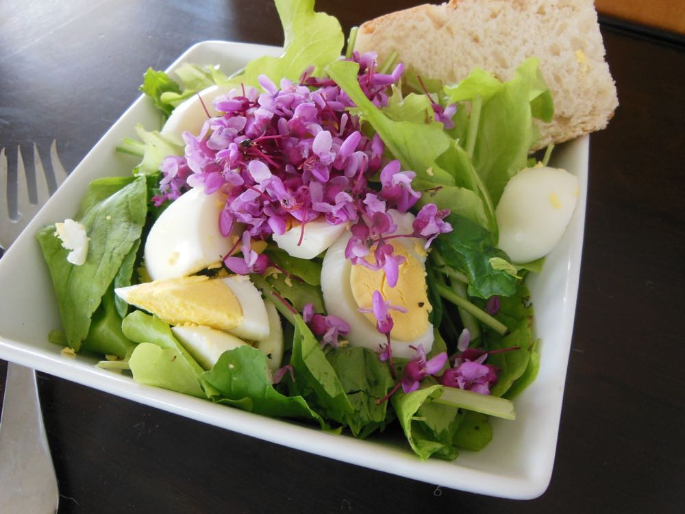 Eastern redbud flowers make for a pretty, and healthy, salad garnish.