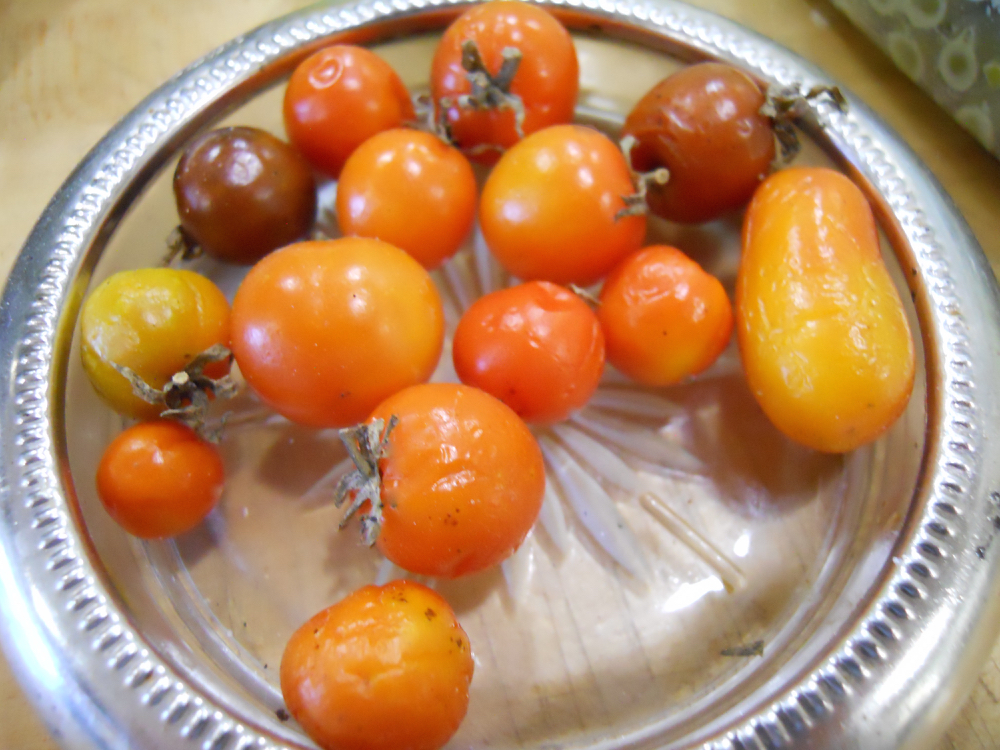 These are the last of my cherry tomatoes, picked the night before the first hard frost.