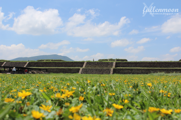 flowers at Teotihuacan