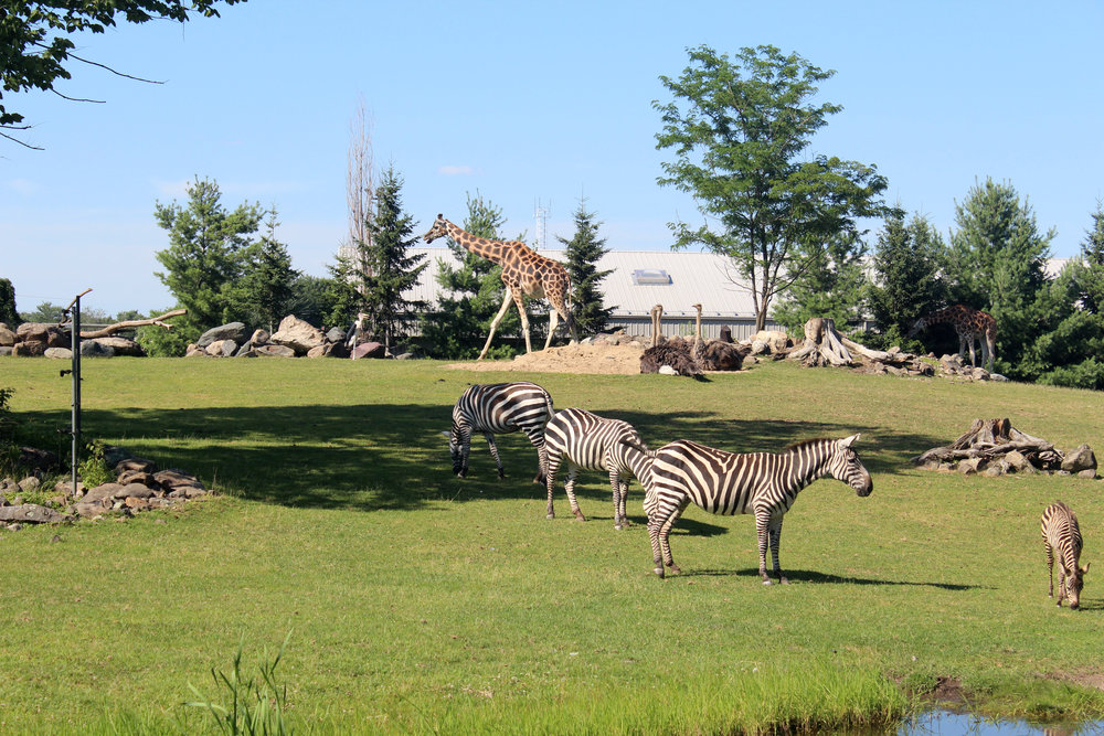 zoo de grandby animals.jpg
