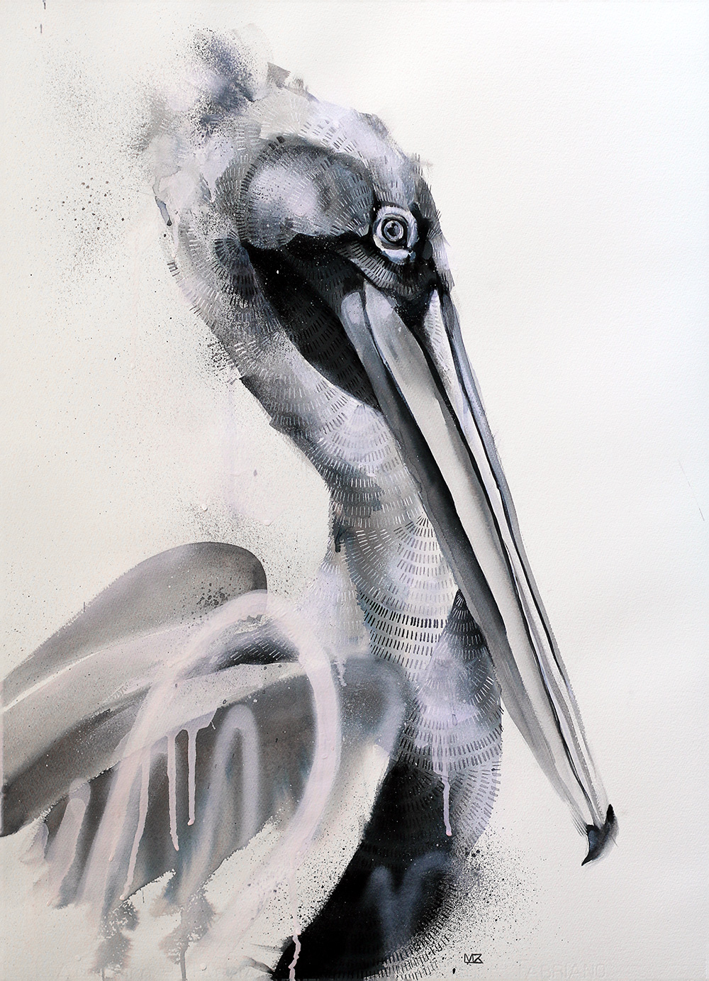 Blackwater Pelican