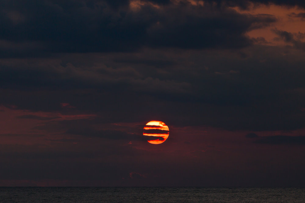 www.sarakrebsbach.com_full sun-1.jpg