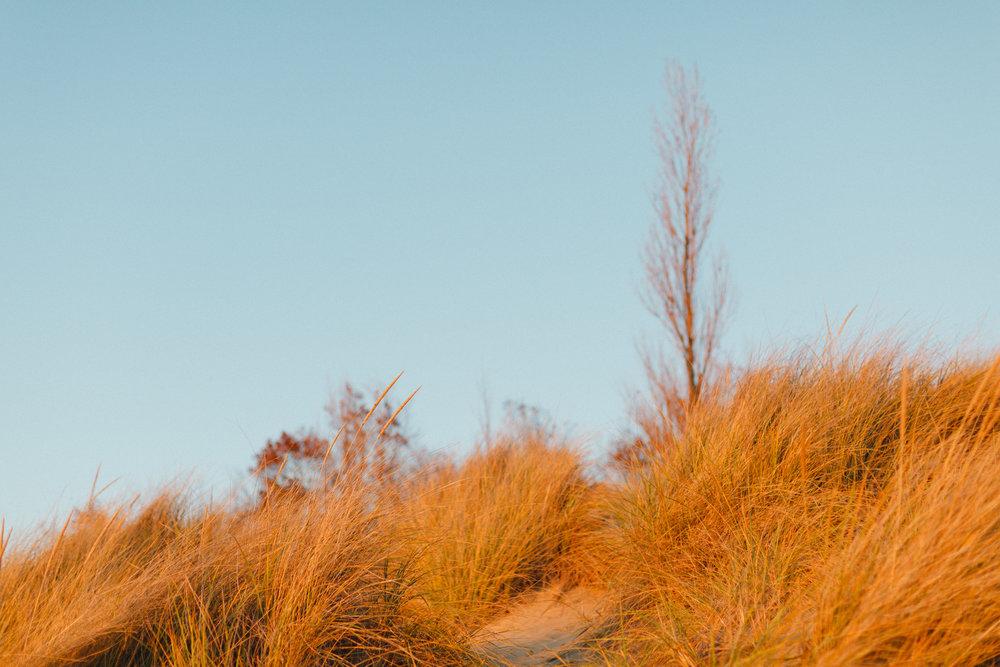 www.sarakrebsbach.com_kirk park beach-10.jpg
