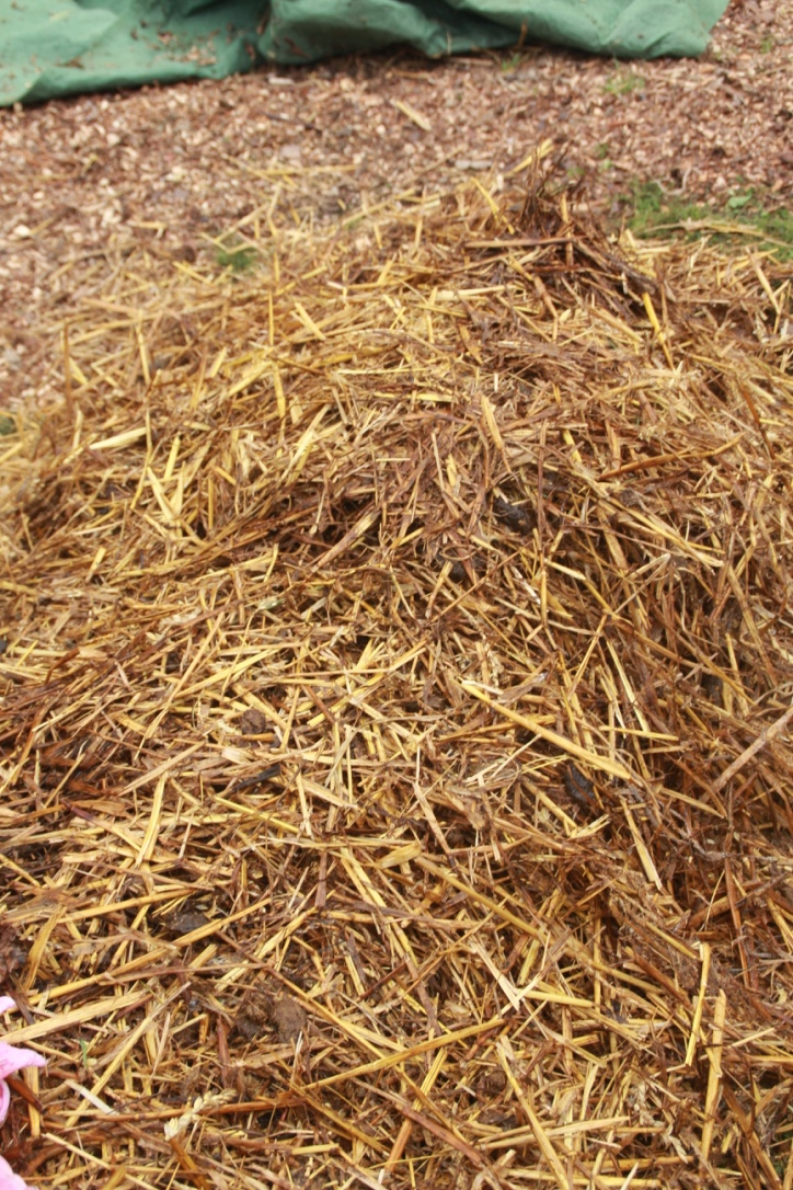 A. Layer of Straw