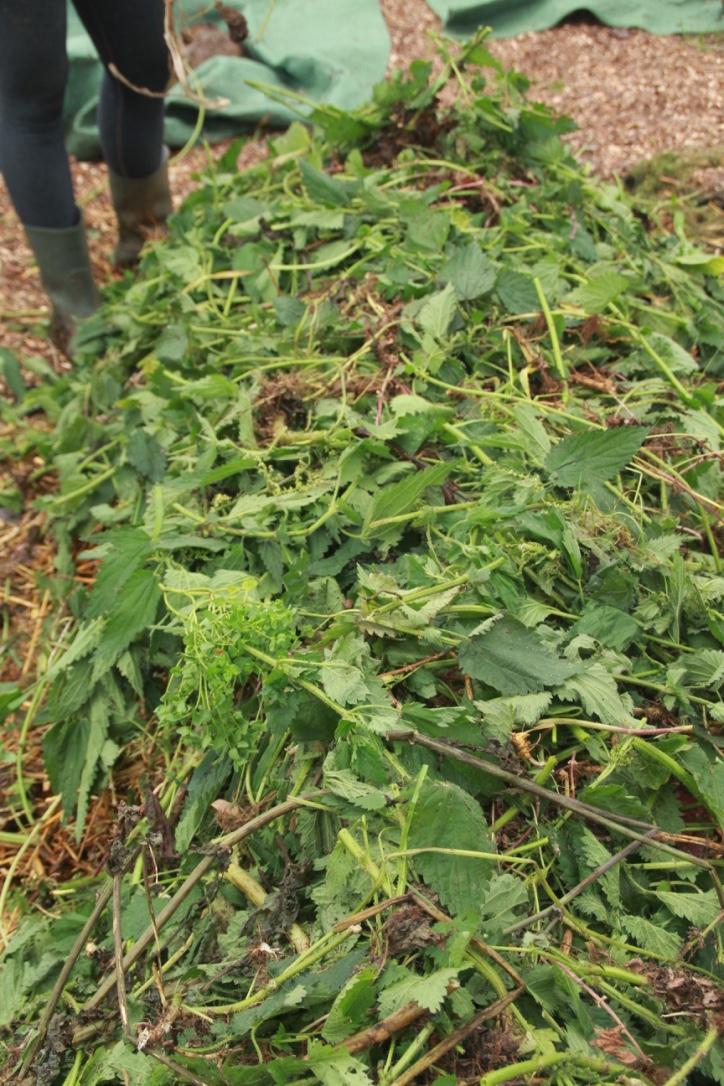 C. Fresh Weeds