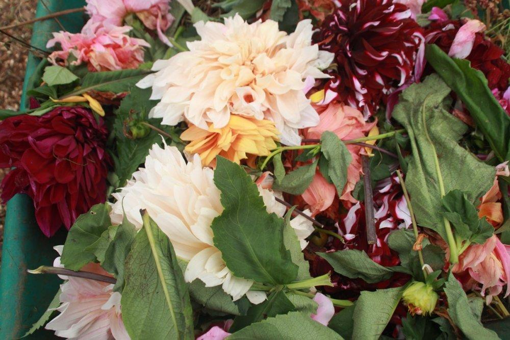 G. Spent Flowers