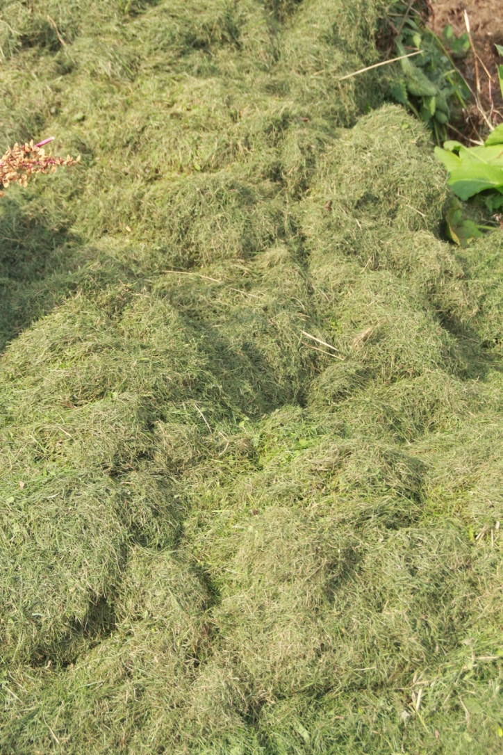 3. Grass Clippings